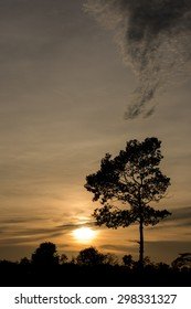 tree silhouette, sunset sky backgroud