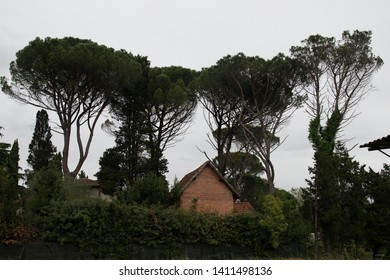Tree silhouette in Toscana, Italy