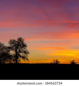 tree silhouette with warm sunset summer orange sunrise