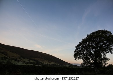Tree silhouette in wave form against the dawn sky with vapour trails. Troutbeck, Lake District, UK. October.