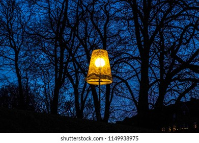 Tree silhouette at winter night in the park