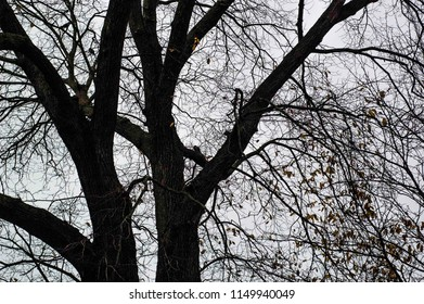 Tree silhouette at winter in the park
