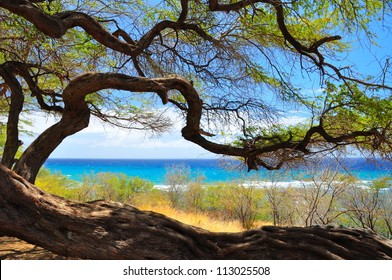Tree silhouetted against blue ocean