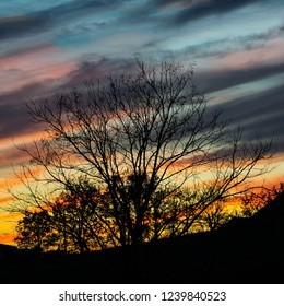 Tree silhouetted against a paintbox sky