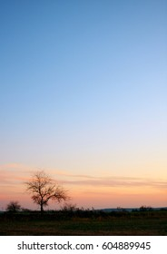 Tree Silhouetted Against Sky at Twilight