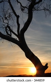 tree silhouetted by sunset