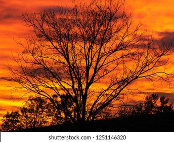 Tree silhouetted on a flaming evening sky in Southern France