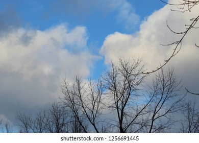 tree silhouettes with billowy white and gray clouds against a bright blue sky