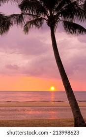 Tree Silhouettes Coconut Horizon