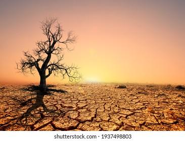 Tree silhouettes die in arid regions due to global warming.