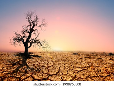 Tree silhouettes die in arid regions due to global warming.