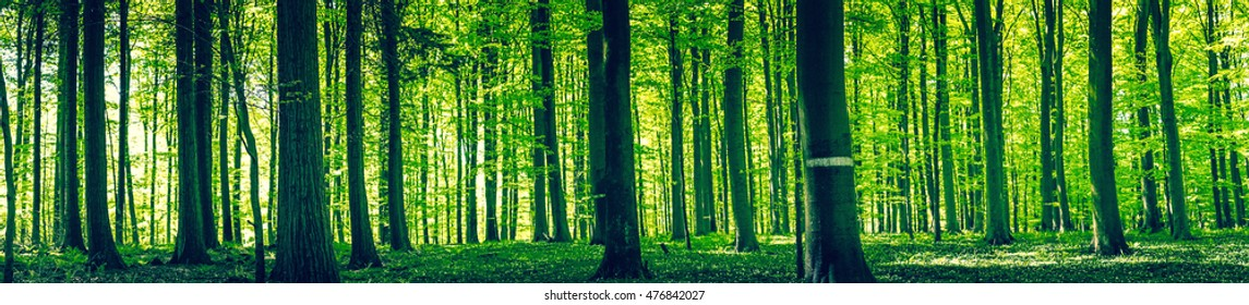 Tree silhouettes in a green forest panorama scenery