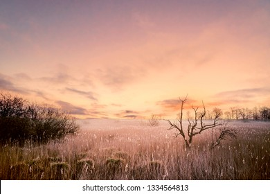 Tree silhouettes in a magical morning sunrise with a dramatic sky in violet colors