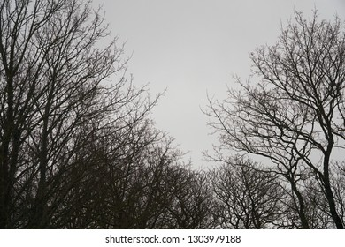 A tree silhouettes on a light gray background. The naked treetops and sky, black and white contrasts in nature. Amazing design of natural landscapes.