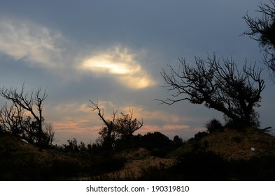 Tree silhouettes on a twilight sky