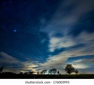 Tree silhouettes in a starry night