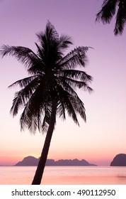 Tree Silhouettes Sunset Divine