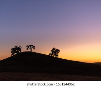 Tree silhouettes in the sunset near Folsom California