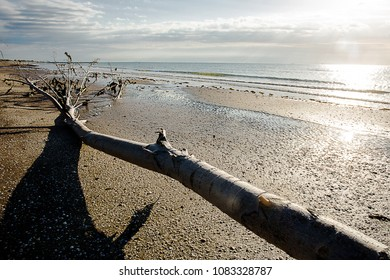 tree skeleton in a wild beach with low tide