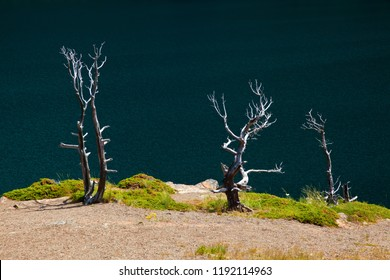 Tree Skeletons on the shore of Saint Mary Lake in Glacier National Park, Montana, USA