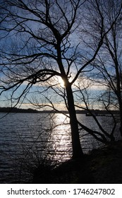 The tree at Västra Skogen, Solna, Sweden
