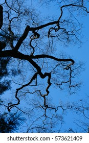 Tree and sky 2 Winter skies and thick trees The tree waits for spring in winter.  The stretched stalks are like human blood.