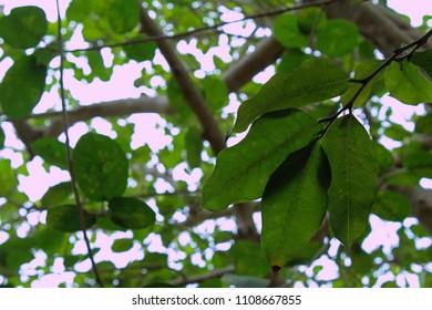 Tree an sky