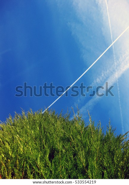 Tree and sky backgrounds.