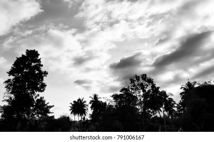 tree and sky with black and white color