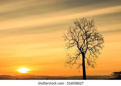 Tree with sky gradient from orange sunset