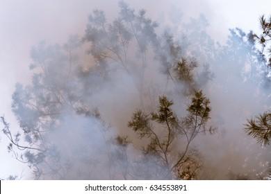 Tree in a smoke looking like dense fog