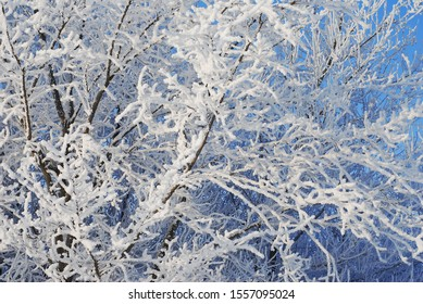 tree in snow on a sunny winter day - Shutterstock ID 1557095024