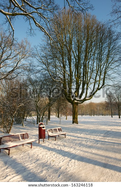 tree in snow and seat