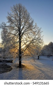 Tree with snow and sunrise in garden in Belgium