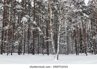 A tree in the snow in winter on the background many trees