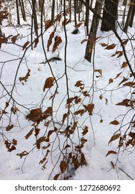 Tree in snow in a wooded area