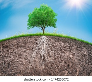tree and soil with roots and grass, organic care concept