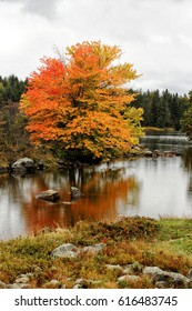 A tree sporting the colorful colors of autumn, growing on the waters edge in New England.