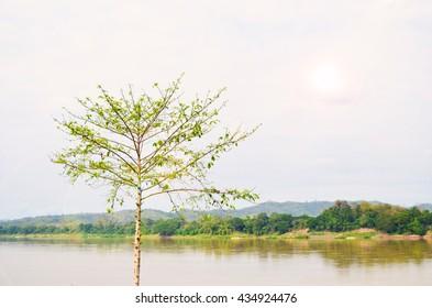 Tree in the Spring Seasons.