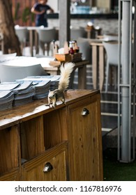 Tree squirrel in the cafe