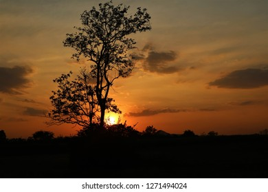 A tree Stand alone at subset time