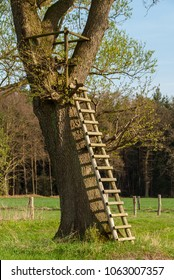 Tree stand with ladder in Stöckse in springtime