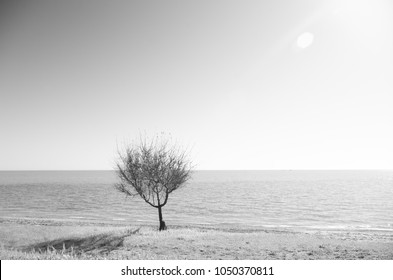 a tree standing alone on the seashore