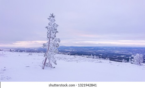 Tree standing in front of an early morning sunrise in Idre, Sweden with a view from the top of the ski slope and down over the valley with snow covered trees below and mountains in the background.