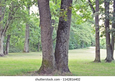 tree standing in the park