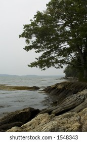 A tree stands on the rocky coast at Wolf's Neck State Park in Freeport, Maine.
