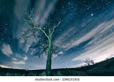 A tree in a starry night at Bencecu de Jos village, Romania