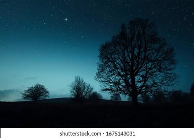 夜景の木と星空