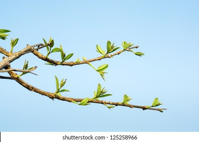 Tree stick against blue sky background.
