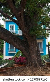 tree and storefront in cathedral plaza of old san juan puerto rico